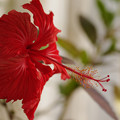 Photos: 南の花