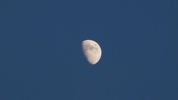 月が出てました