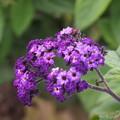 Photos: ちっさい花