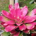 Photos: 花っちゅうか、なんちゅうか・・w