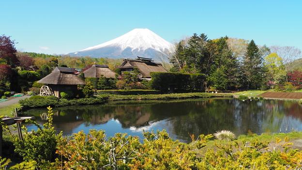 忍野八海と富士