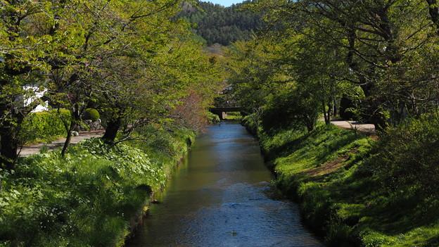 忍野八海の川