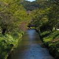 Photos: 忍野八海の川