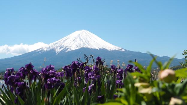 あやめと富士山