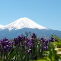 Photos: あやめと富士山