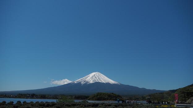 Photos: 河口湖と富士山