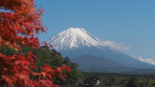 精進湖と紅葉と富士山