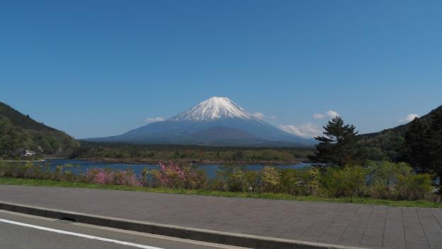 Photos: 精進湖と富士山
