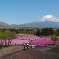 富士芝桜展望広場