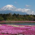 竜神池と芝桜と富士山