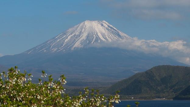 ドウダンツツジと富士山