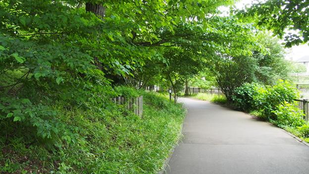 整備された森林公園