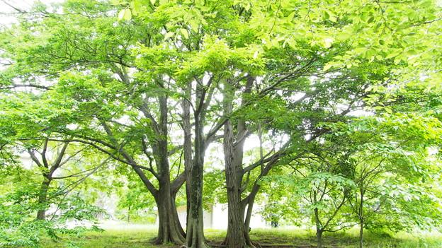 癒やされる樹木