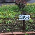 写真: 大宮花の丘公園03