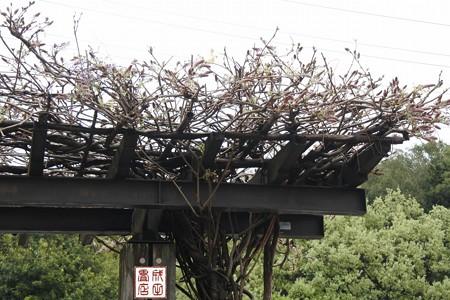 大宮花の丘公園10