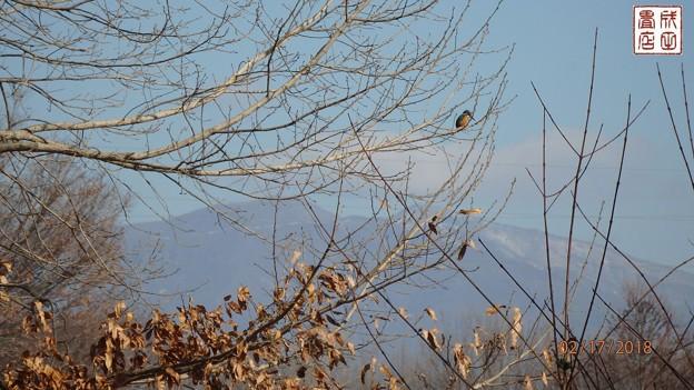 写真: カワセミ02