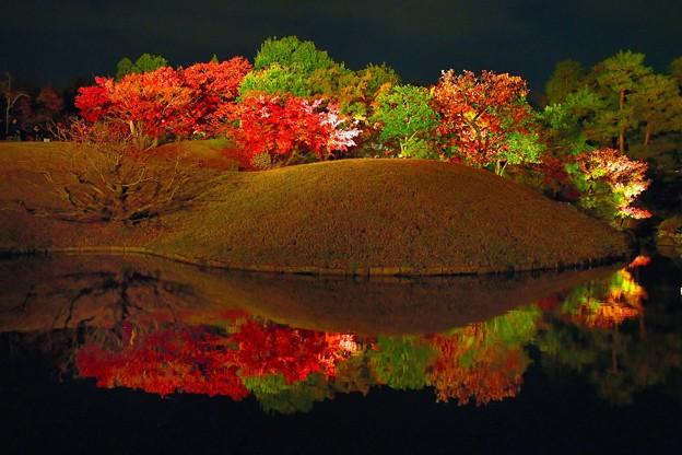Photos: 梅小路公園ライトアツプ