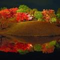 写真: 梅小路公園ライトアツプ