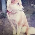 Photos: 昔の犬