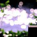 写真: 2)~Sunshine~