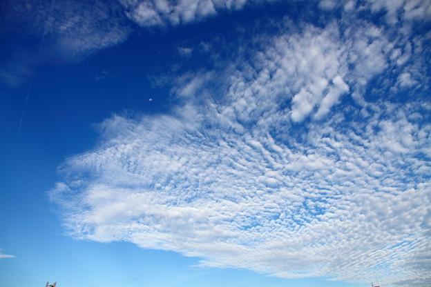 ~空を見上げると其処にはクモンモ~♪~♪