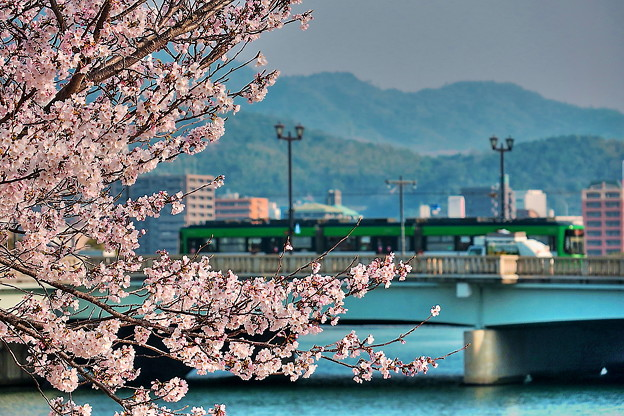 「相生橋」~桜と路面電車