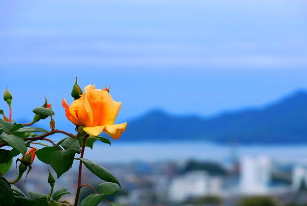 雨の日は丘の上の薔薇園へ・・