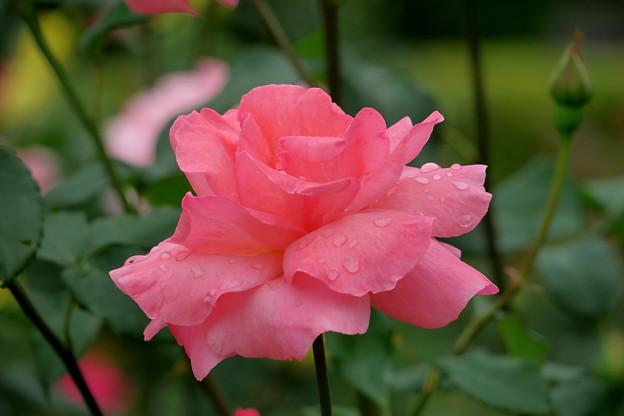 ~Rainy Summer~