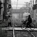 写真: 梅雨の一コマ~「遮断機が上がり・・」~
