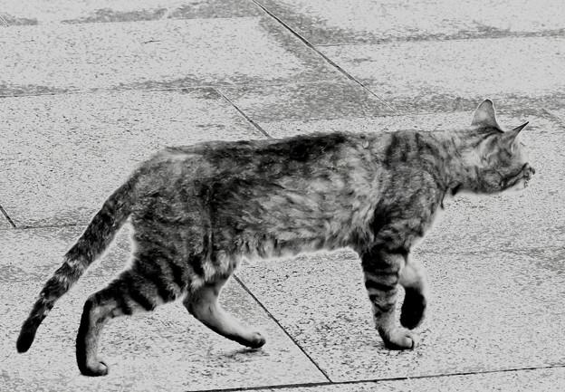 写真: ネコあんよ~