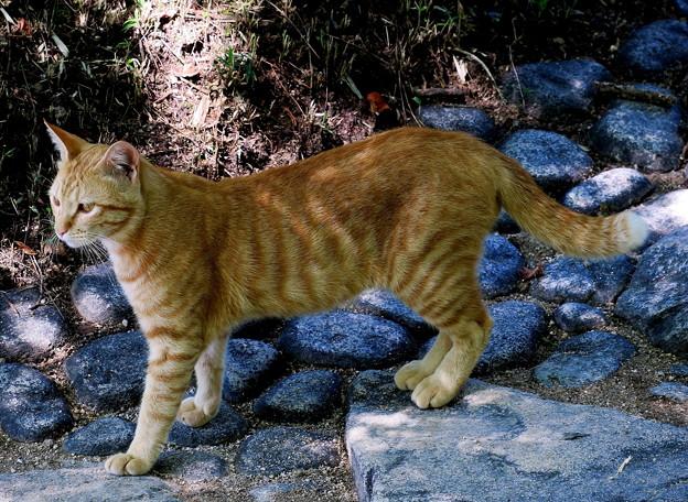 猫(コイツは初対面です。名前考えよう・・)