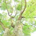 写真: 樹~皆!頑張って!