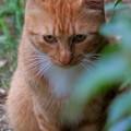 2~何気に猫Pasha!!~(´艸`*)