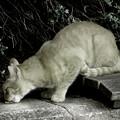 5~何気に猫Pasha!!~(´艸`*)