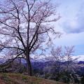 写真: ふるさとの春