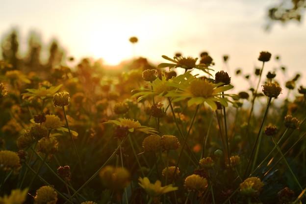 夕暮れの秋空 4
