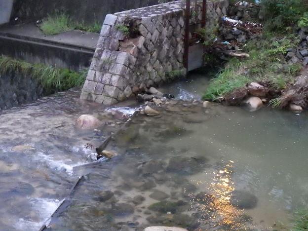 出会い橋取水堰板02