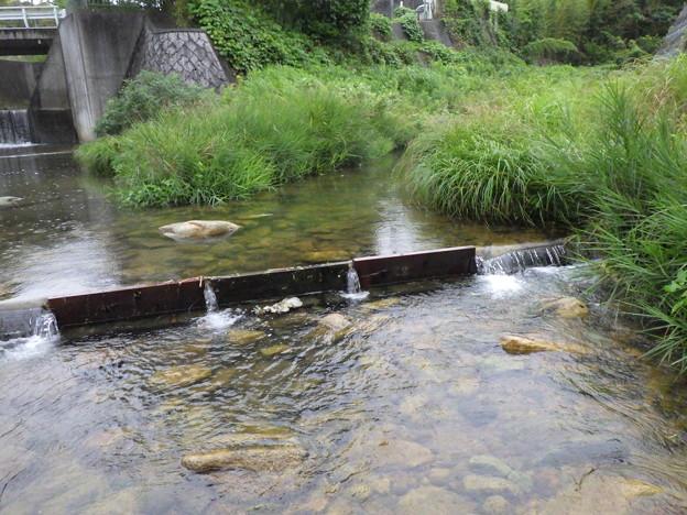 出合橋水量豊富1