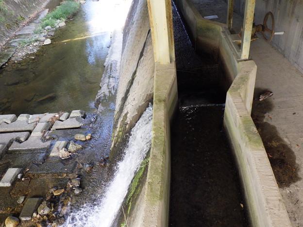 河川へ放水2