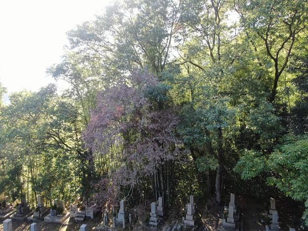 墓地の枯れ枝01