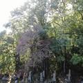Photos: 墓地の枯れ枝01