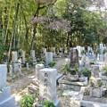 Photos: 墓地の枯れ枝03