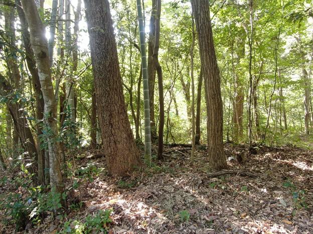 墓地の枯れ枝、木