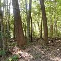 Photos: 墓地の枯れ枝、木