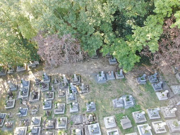 Photos: 墓地の枯れ枝07