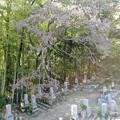 墓地の枯れ枝08