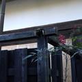 Photos: 塀の不具合01