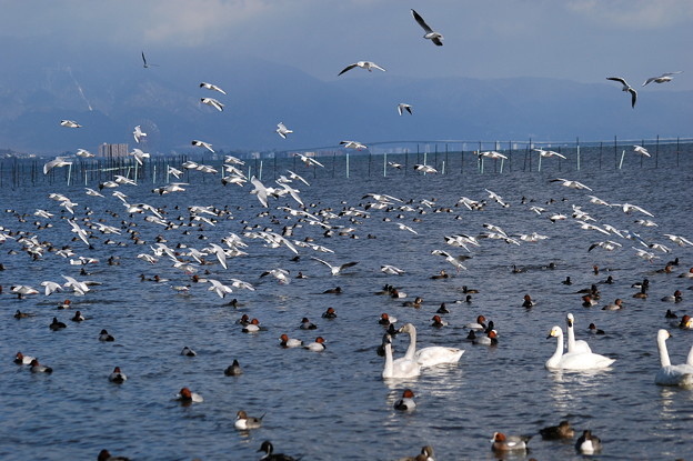 2006年頃(12年前)の草津湖畔の写真
