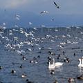写真: 2006年頃(12年前)の草津湖畔の写真