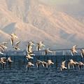 写真: 草津湖畔arcv